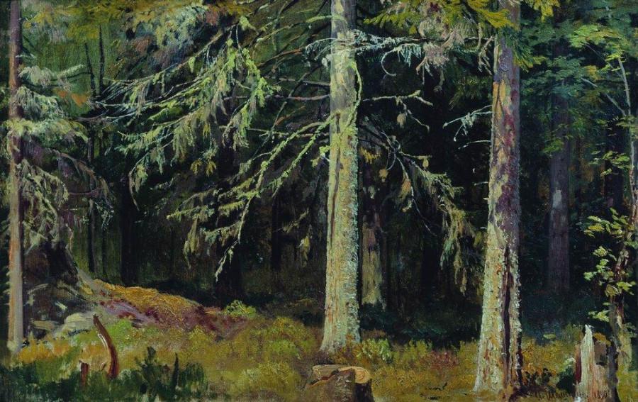Еловый лес. 1890