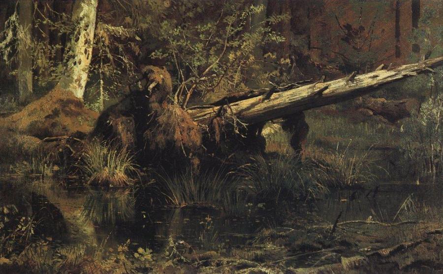 Лес (Шмецк близ Нарвы). 1888
