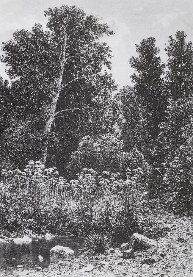 Опушка. 1885
