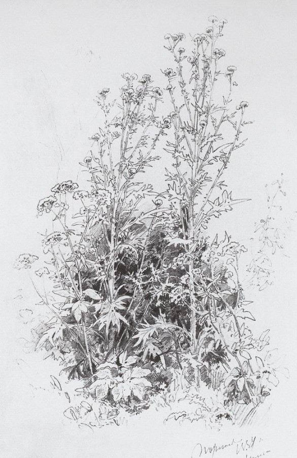 Полевые цветы. 1884