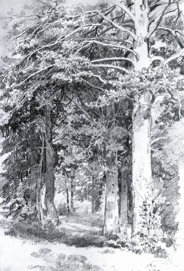 Сосновый лес1. 1889