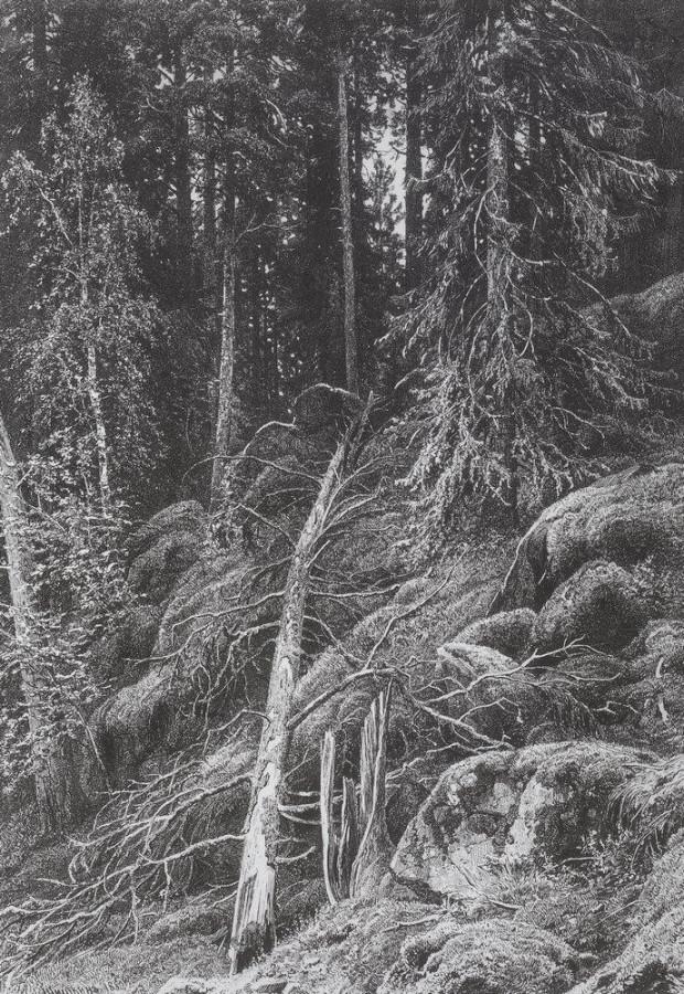 Тайга. 1880