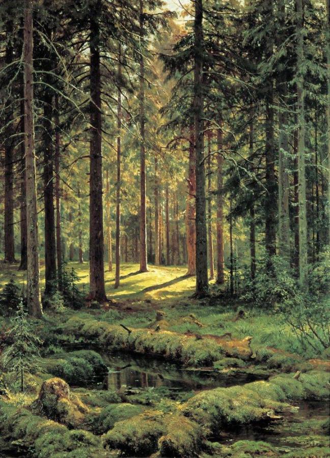 Хвойный лес. Солнечный день. 1895
