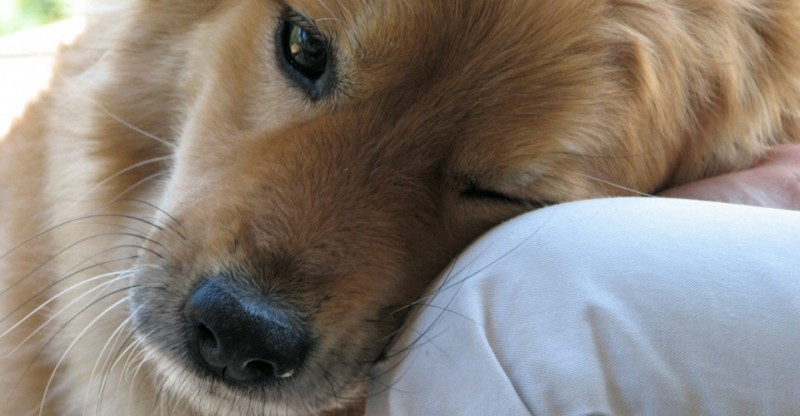 Dogs_Love1