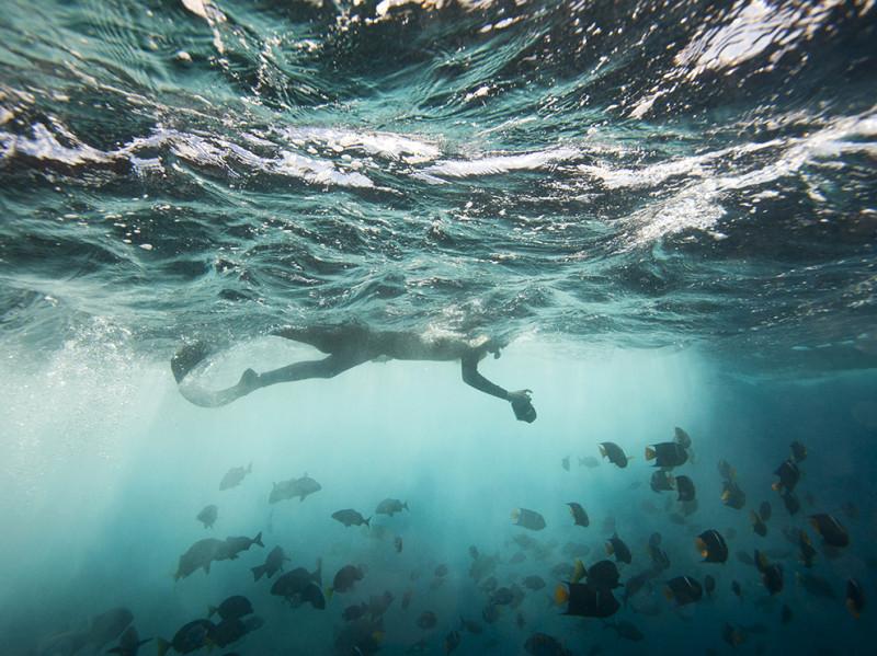 snorkel-floreana-island-galapagos-ecuador_91742_990x742