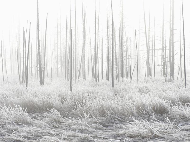white-winter-yellowstone-national-park_90120_990x742