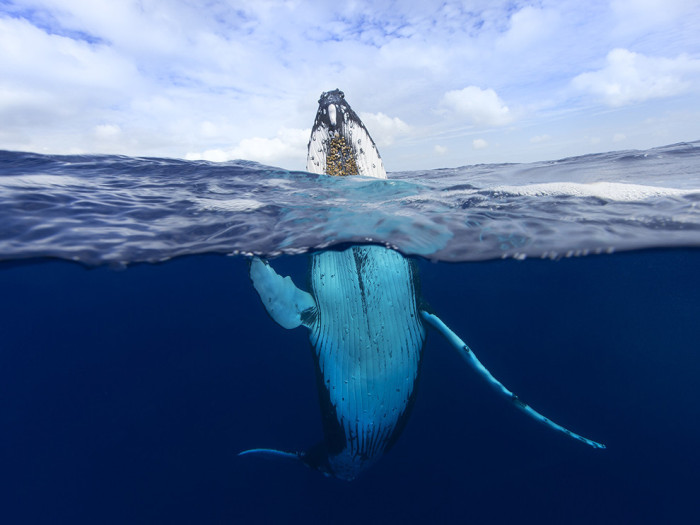 national_geographic_28