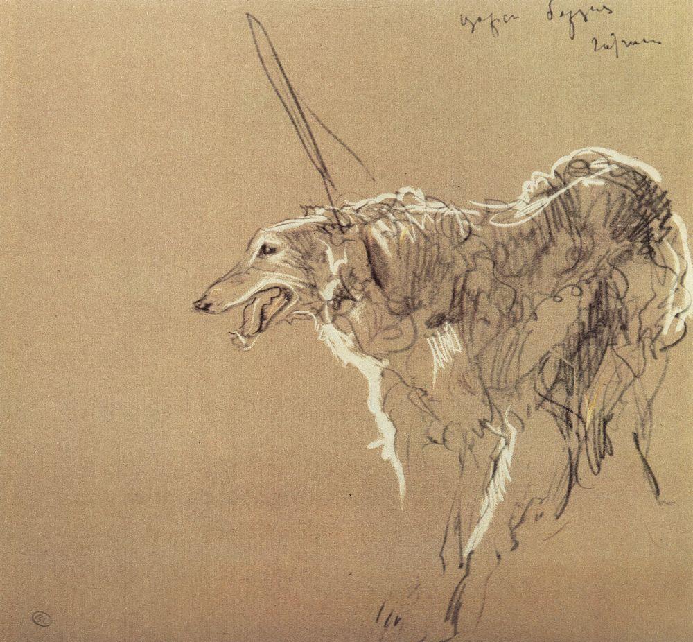 Борзая царской охоты. 1902