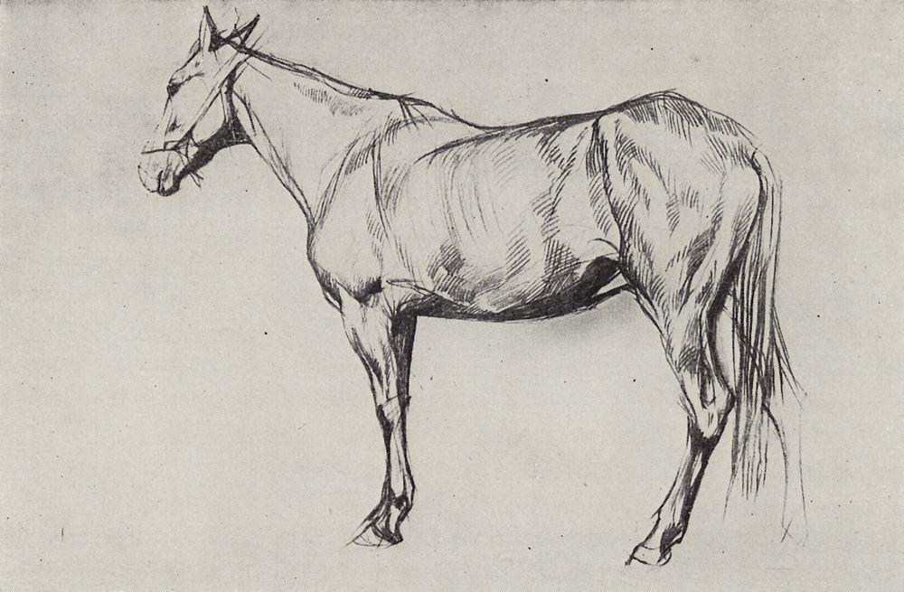 Лошадь. 1884