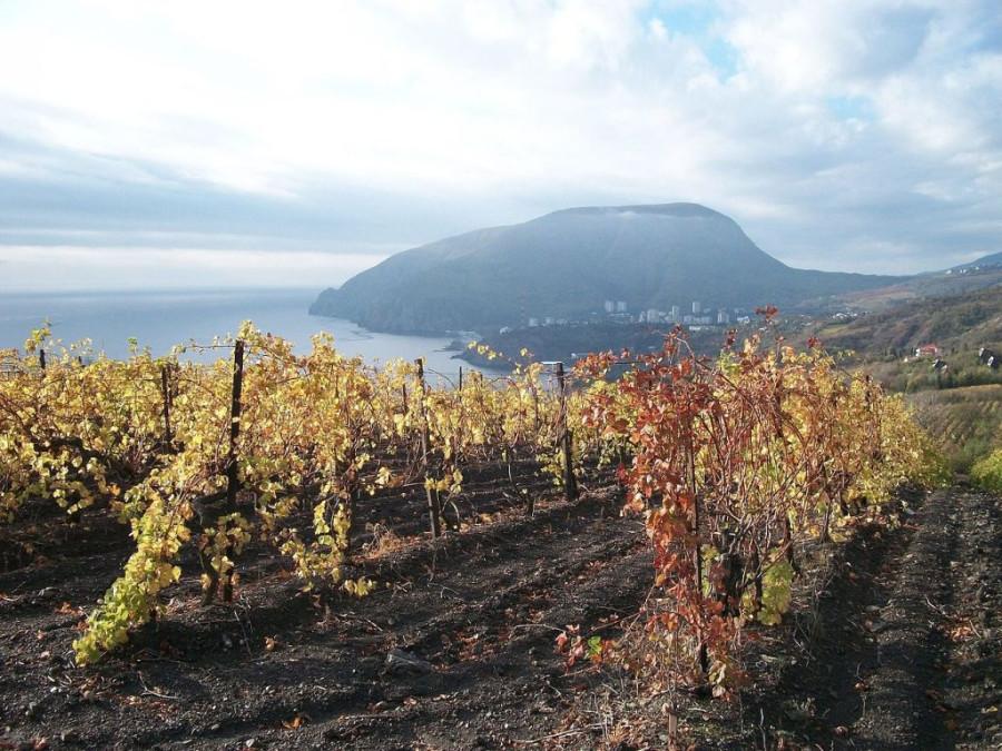 Крымский винный проект закрыт. Что будет с винами