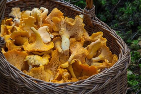 fungus-1194380_1280-768x512