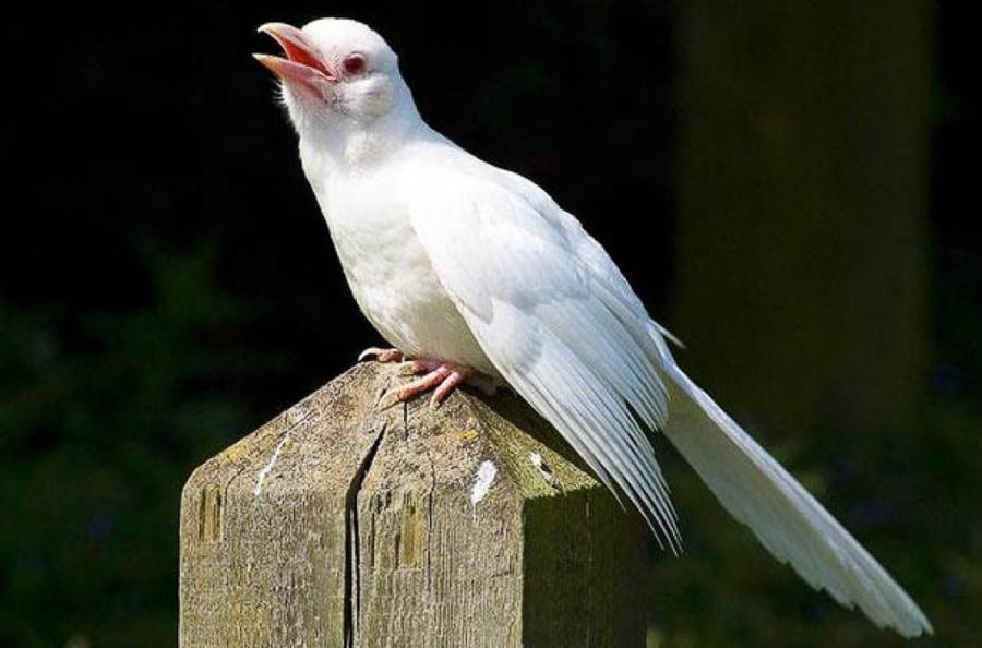 играют, редкая белая ворона фото привыкли, что