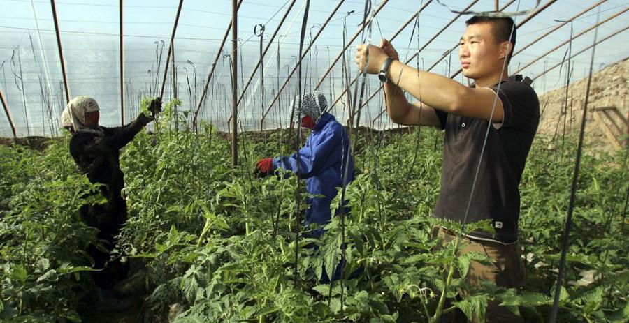 Китай арендует земли в России
