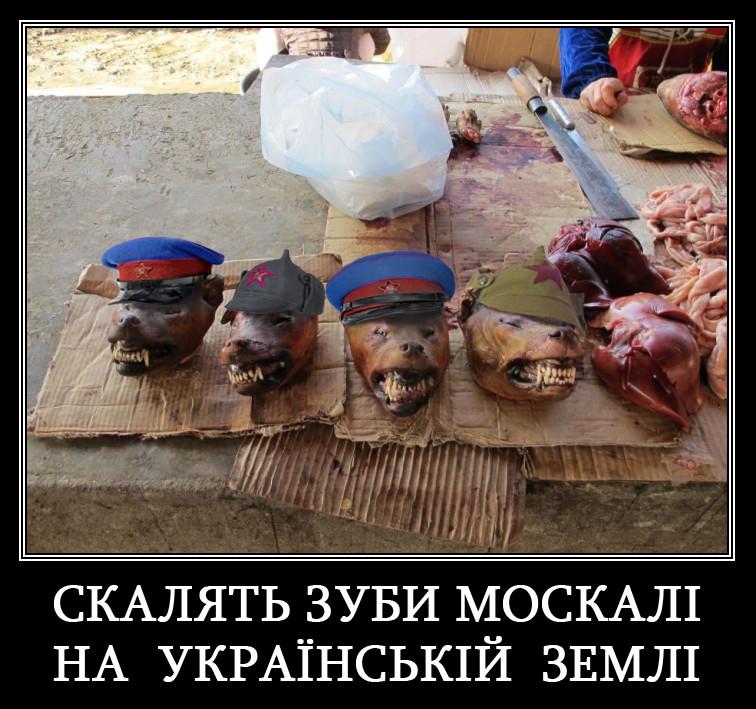 СБУ обнаружила тайник со взрывчаткой в центре Новограда-Волынского - Цензор.НЕТ 2644