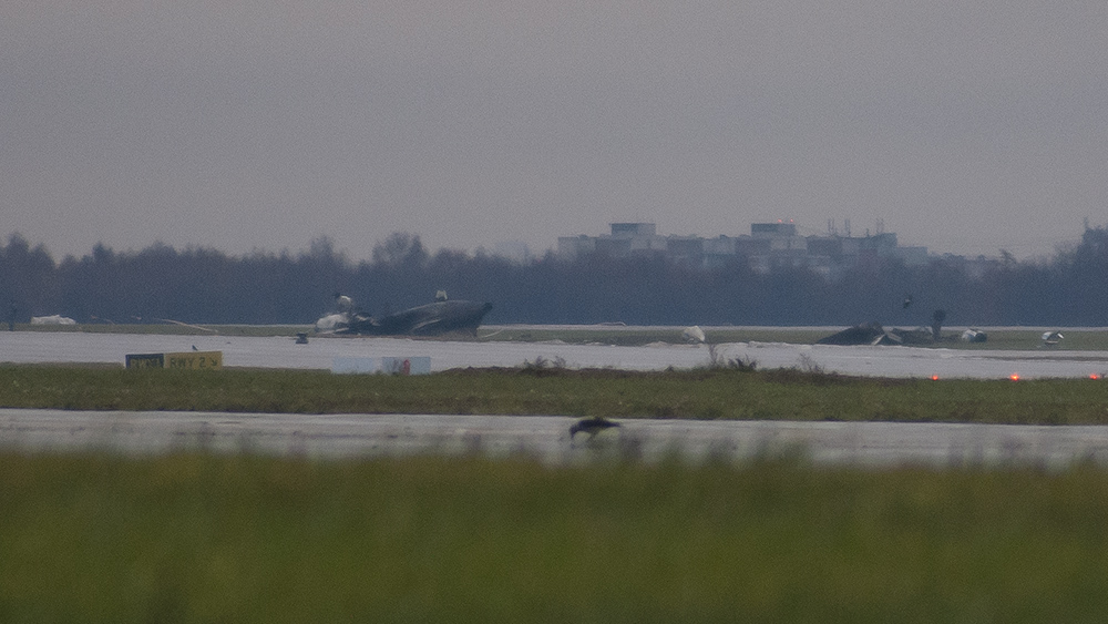 F-GLSA FA50 Unijet VKO CRASH