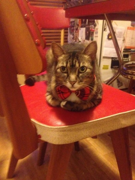 maddy in a bow tie