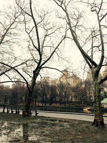 NY Park!!!