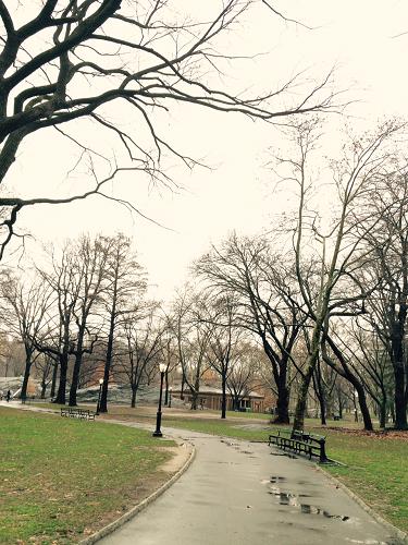 NY Park1