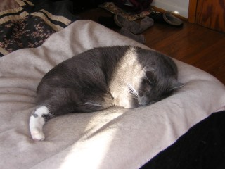 Mystic sleeping