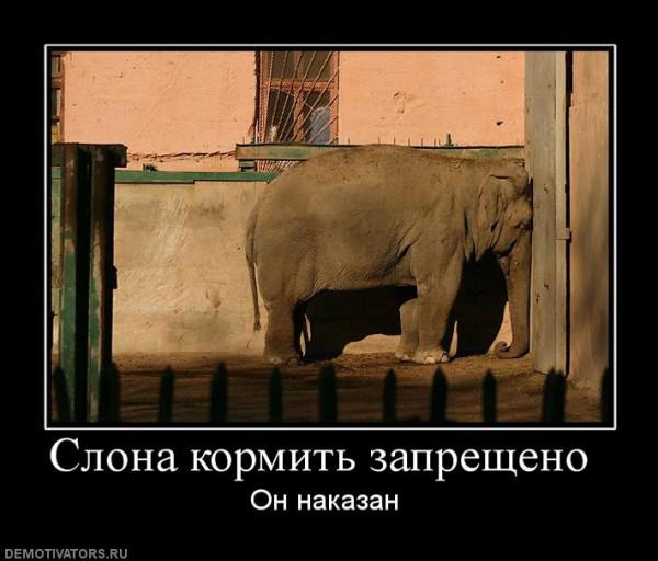 slona-kormit-zaprescheno-
