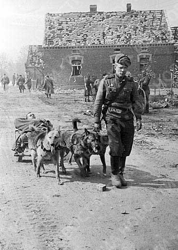 psia zachranka 1943