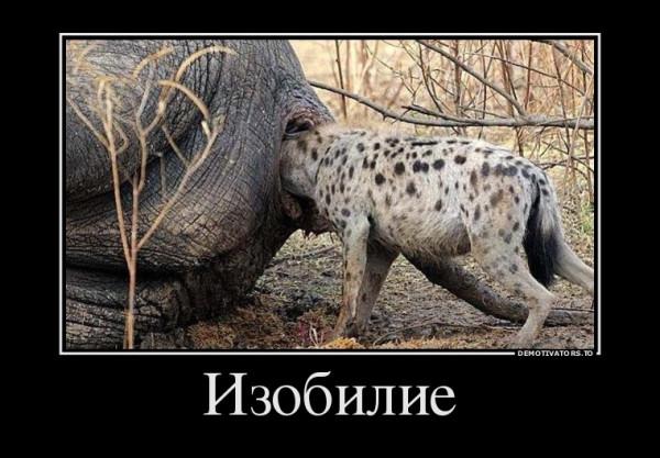 izobilie_demotivators