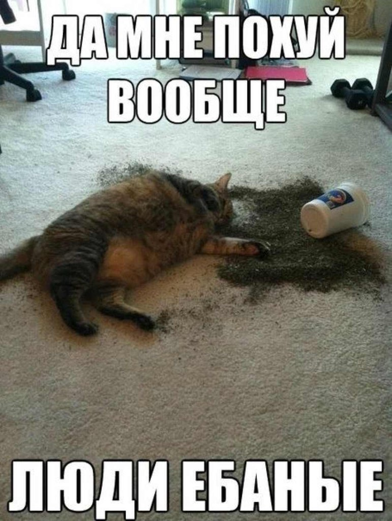 гифки-кот-живность-упало-703796
