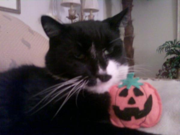 Halloweenicky