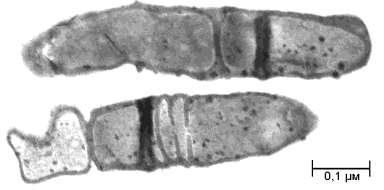 risLA-3