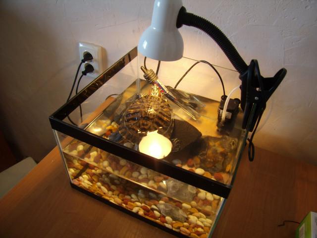 Лампы для обогрева черепах красноухих
