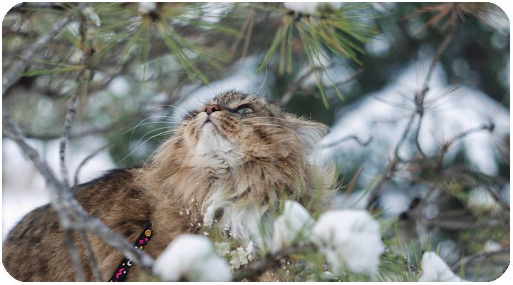 wintercat1