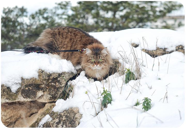 wintercat3