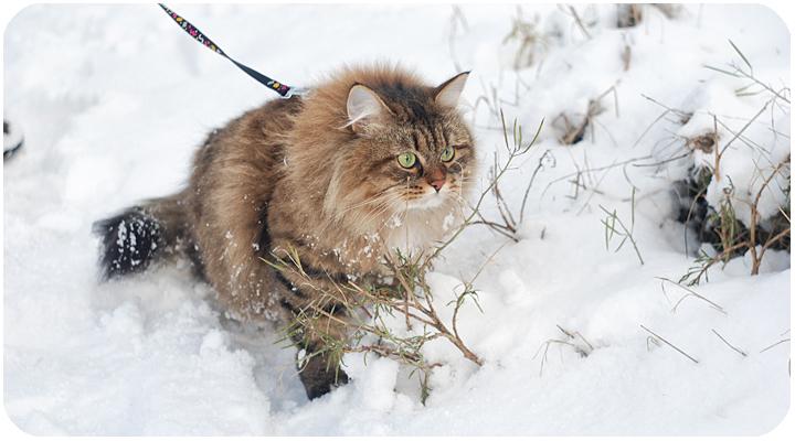 wintercat4