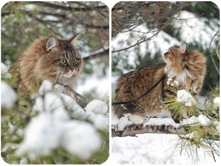 wintercat6