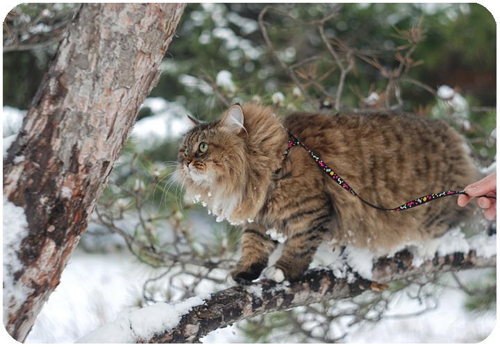 wintercat7