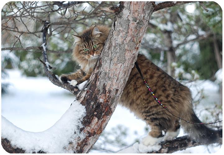 wintercat8