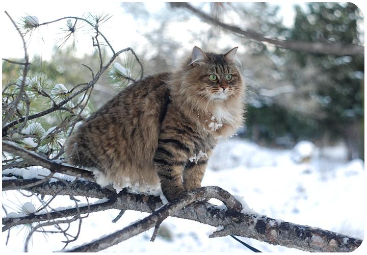 wintercat11