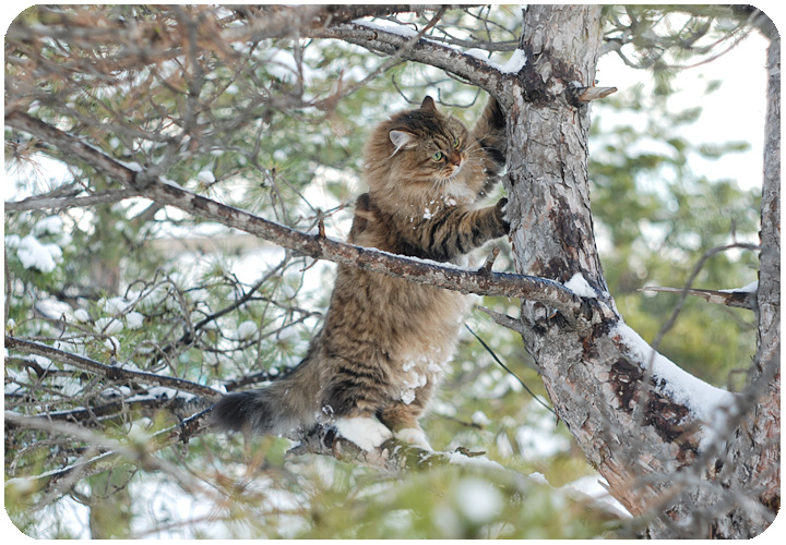wintercat12