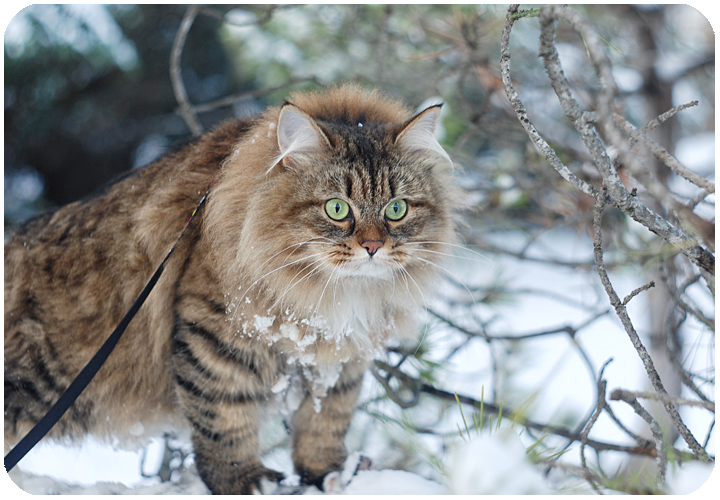 wintercat13