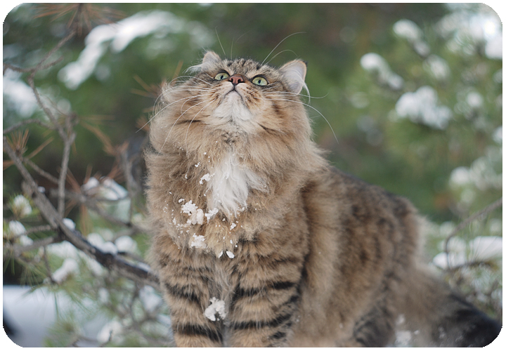 wintercat14