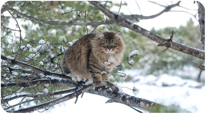 wintercat15