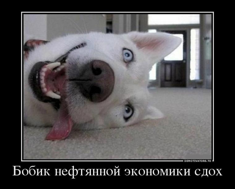 698482_bobik-neftyannoj-ekonomiki-sdoh_demotivators_ru