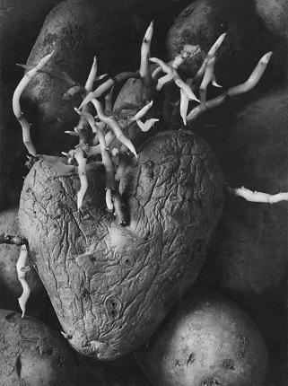 10_Аньес Варда. Картофельное сердце. 1953 год. Из серии «Воспоминание о выставке 1954 года». Предоставлено художником и галереей Натали Обадиа, Париж/Брюссель © Аньес Варда
