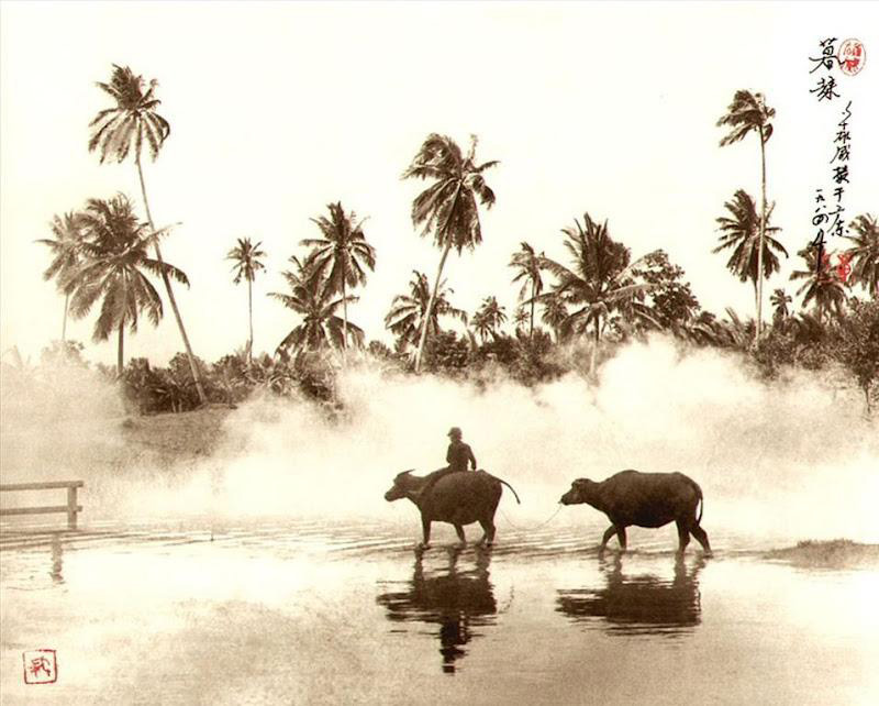don-hong-oai-chinese-paintings-photography-riding-on-carabaos-water-buffaloes