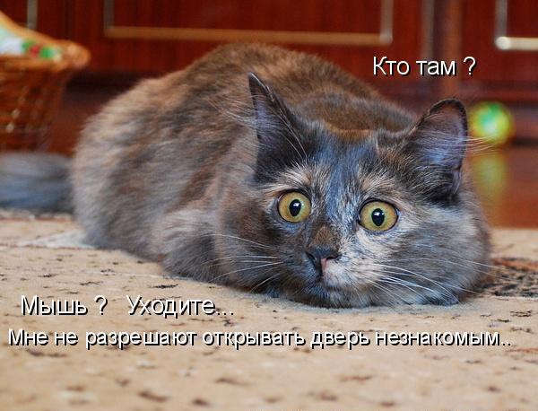 1260294746-prikolnye-koshaki-s-podpisjami-85-foto_AddFun.ru_44