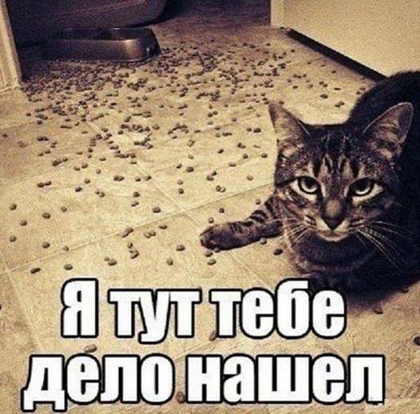 1444501120_podborka_vecher_16