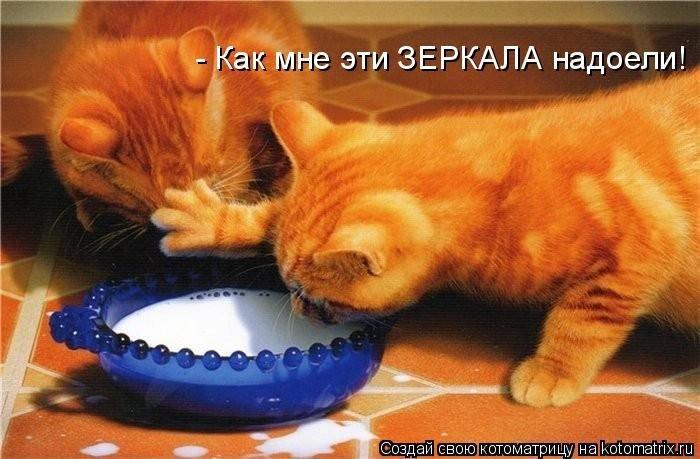1460226425_kotomatrix_27