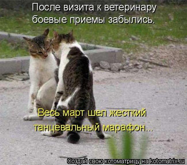 1461389821_kotomatrix_20