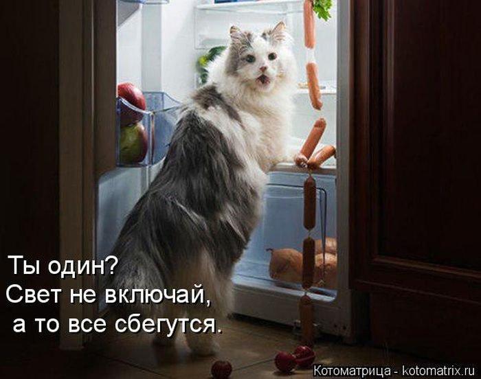 1462772818_kotomatrix_43