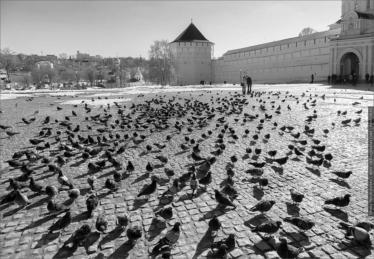 golubi-2.jpg
